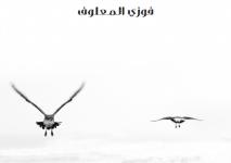 تحميل كتاب على بساط الريح pdf – فوزي المعلوف